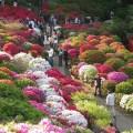 Azaleas in bloom. Source: epochtimes