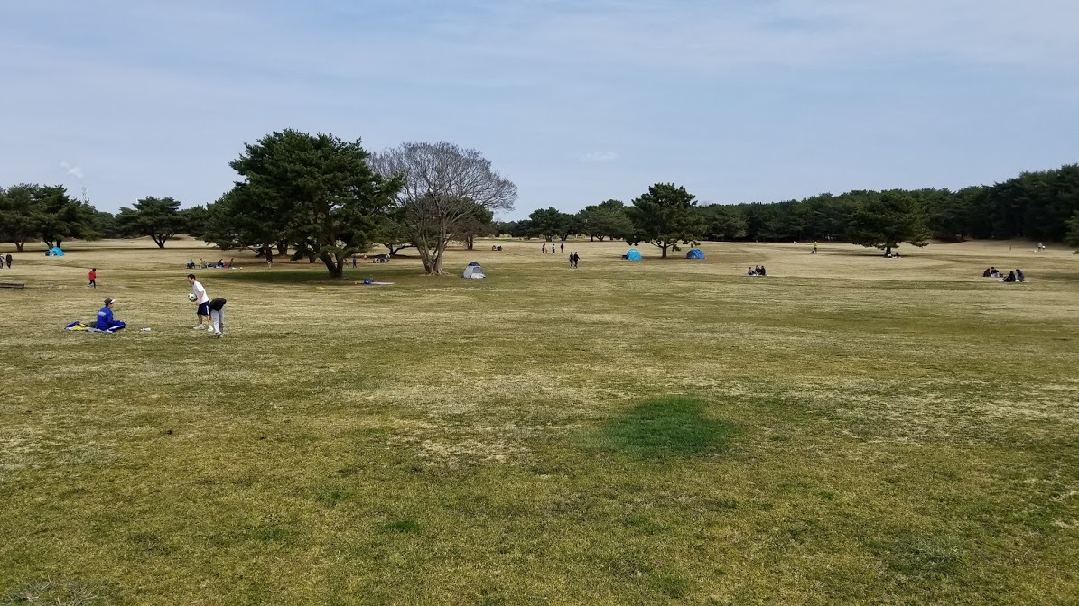 Huge area for a picnic